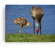 See, Son, That's How We Do It... Canvas Print