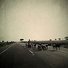 This is road is like an empty page, I let my feet tell a story by Th3rd World Order