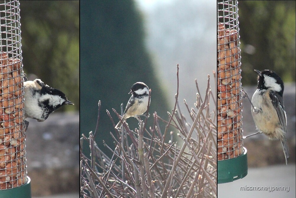 Coal Tit Collage by missmoneypenny