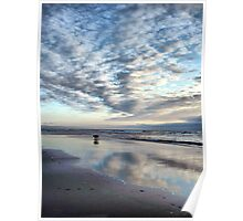 Clam Beach Canines Poster