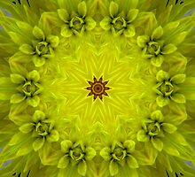 Citrus mandala by Marilyn Baldey