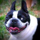 Big Smile ~ a dog's life!   by Jenni Atkins-Stair