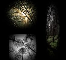 Lost in A Forest by Geoffrey Dunn