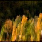 Aspen Reflections by ChrisBaker
