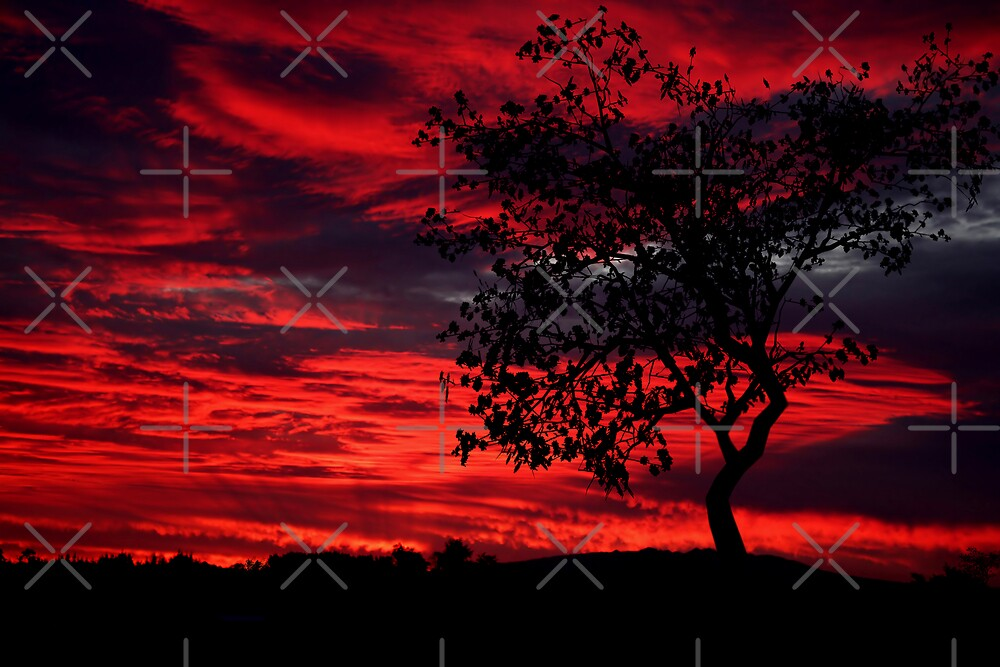 Flame Tree by Varinia   - Globalphotos