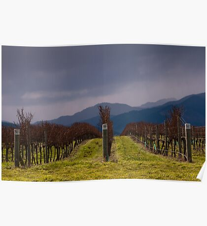 Grapevines after Pruning Poster