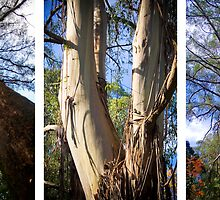 Triptych of trees at Sassafras by Elana Bailey