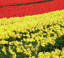 Sea of Tulips by JuliaWright