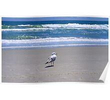 Ocean Bound Poster