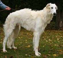 Cool Borzoi by welovethedogs