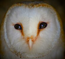 Barn Owl Portrait .......... by jdmphotography