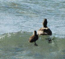 Surfing Ducks Sticker