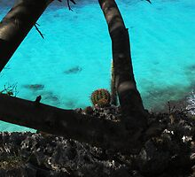Bonaire  Cliff Side by Stung  Photography