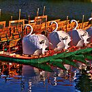 Boston Swans by LudaNayvelt