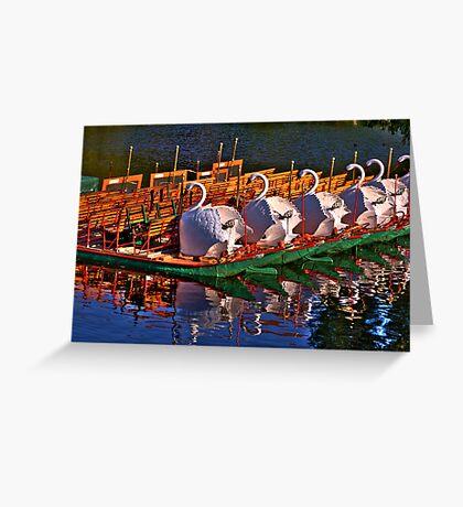Boston Swans Greeting Card