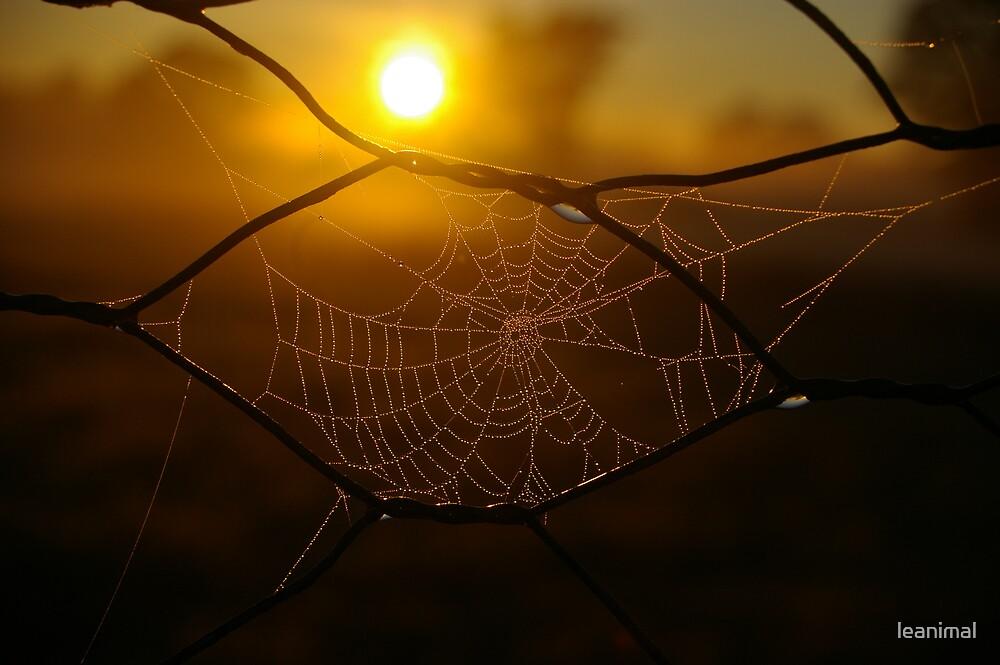 frosty web by leanimal