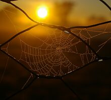 frosty web by leanimal