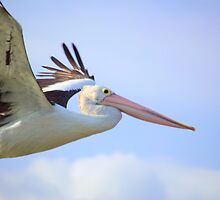 Pelican Pete by gcambo