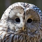 Ural Owl giving the funny look by Mariann Rea