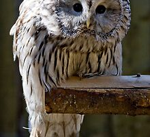 Whoo are youu? by Mariann Rea