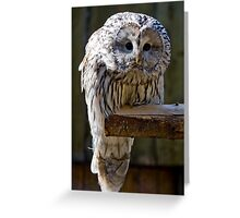 Whoo are youu? Greeting Card