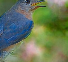 Bluebird for Mama by Bonnie T.  Barry