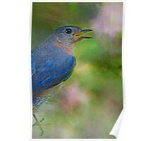 Bluebird for Mama Poster
