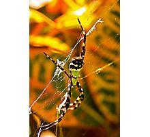 Spiderman? Photographic Print