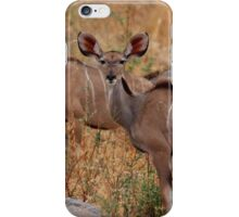 Fluffy Kudu