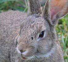 el Bunny Bandito by Lenny La Rue, IPA