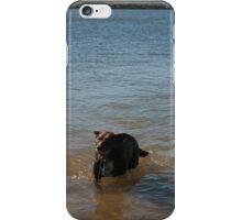 3 Nick's Rescue Dog Rosie a Kelpie-Border Collie iPhone Case/Skin