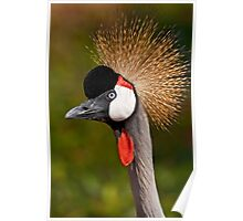 Grey Crowned Crane (Balearica regulorum) Poster