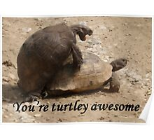 You're Turtley Awesome  Poster