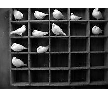 Pigeon Holed Photographic Print