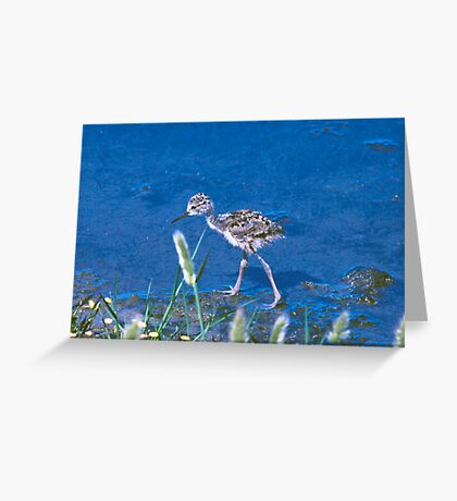 Guess What kind of Bird I Am. Solved Baby Black Neck Stilt shorebird Greeting Card