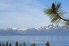 """""""Tahoe's Beauty"""" by Lynn Bawden"""