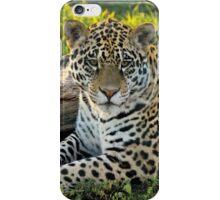 Jaguar (Panthera onca) iPhone Case/Skin