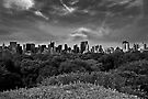 Central Park Canopy by Mary Ann Reilly
