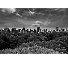 Central Park Canopy Photographic Print