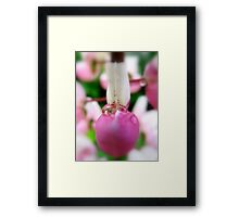 Lupin secret Framed Print