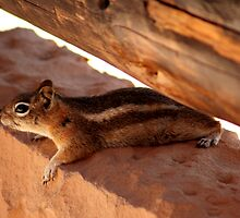 Just catching some shade . . .  by Tim Scullion