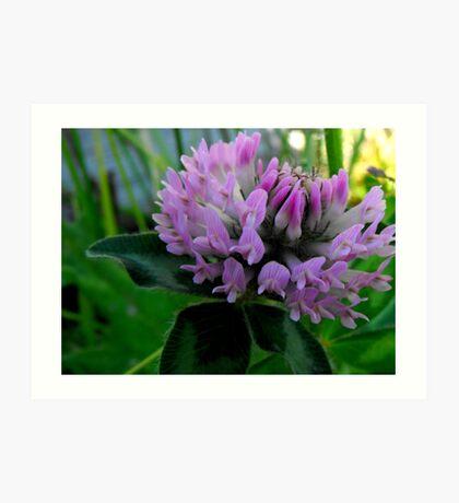clover flower Art Print