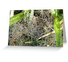 Suspended Crystal Dew Drops Greeting Card