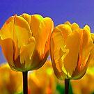 Yellow Tulips by Linda Miller Gesualdo