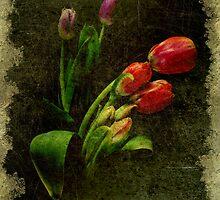 Slightly Damaged Tulips by aluzhun