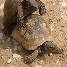 Slow Love - Tortoises  by taiche