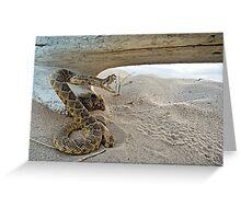 Sneaky Snake Greeting Card