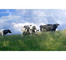 Cow Dreams Photographic Print