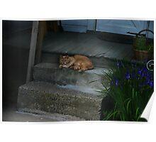 Cat Nap Interruptus Poster