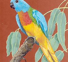 Scarlet-chested Parrot (Neophema splendida) by Peta-Reilly